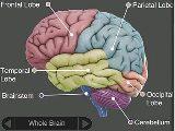 脳S.jpg