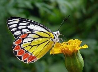butterfly-1181185_640.jpg