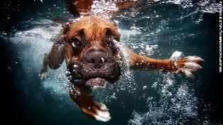 dog-in-water%20(8).jpg