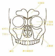 sinus1.jpg