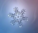 snowflakesmall.jpg